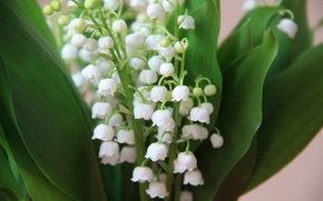 Picture flowers, bouquet, spring, white, lilies of the valley, Lily of the valley