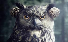 Picture look, owl, bird, bumps
