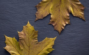 Wallpaper leaves, background, autumn