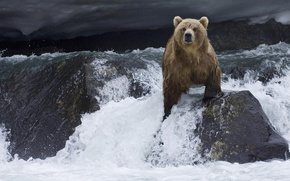 Picture river, bear, Kamchatka