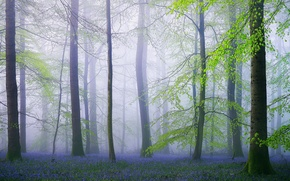 Picture forest, flowers, nature, England, spring