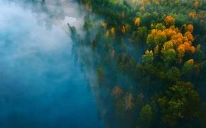Picture autumn, forest, water, nature, fog, paint, haze