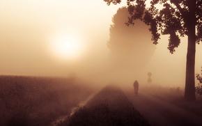 Picture road, trees, fog, cyclist, haze, bike
