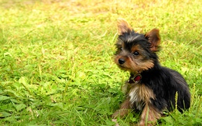 Wallpaper Little, Collar, Grass