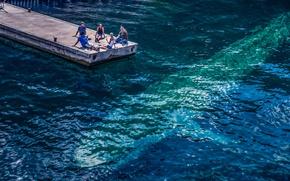 Picture water, people, fish, silhouette, kit, pierce, photo, photographer, sea, resident, Andrés Nieto Porras