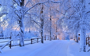 Wallpaper winter, road, forest, the sky, snow, trees, landscape, nature, white, forest, road, sky, trees, nature, ...