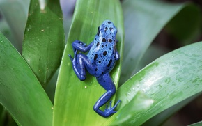 Picture animals, frog, reptiles, Amphibians