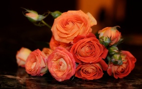 Picture roses, Bouquet, orange, buds