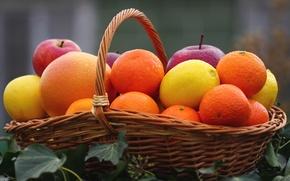 Wallpaper Apple, lemon, Mandarin, fruit, orange, basket, citrus