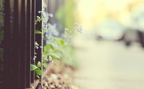 Wallpaper flowers, the fence, focus, fence, blur, grille, bokeh, forget-me-nots