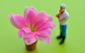 Picture flower, petals, observer