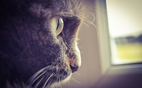 Picture cat, eyes, grey, on the window