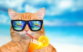 Picture sea, cat, reflection, blue, background, orange, humor, umbrella, juice, red, glasses, cocktail, tube, bokeh