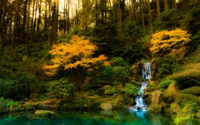 Picture the sun, trees, fish, nature, pond, waterfall, sunshine, trees, nature, waterfall, fishes, pond