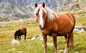 Picture animals, grass, mountains, stones, horses, horse, Wallpaper from lolita777, grazing