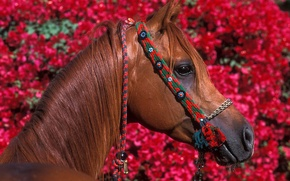 Picture flowers, red, horse, foliage, horse