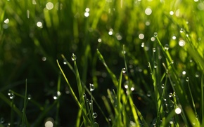 Picture greens, grass, water, drops, macro, nature, Rosa, background, green, widescreen, Wallpaper, drop, wallpaper, nature, widescreen, ...