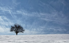 Picture the sky, snow, tree, Asia, ethno-geographical region, Kurdistan