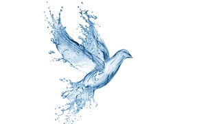 Picture water, drops, squirt, creative, figure, dove, splash, art, Water, art, splash, drops, dove, pigeon, drawing, ...