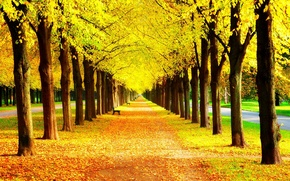 Picture autumn, grass, leaves, trees, bench, nature, Park, colors, hdr, grass, walk, road, trees, nature, park, ...