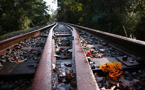 Picture leaves, background, railroad