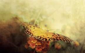 Picture style, background, butterfly