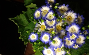 Picture flowers, minimalism, blue, blue, beautiful