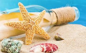 Picture sand, beach, summer, shell, seashells