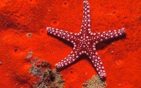 Wallpaper Red, Sea, Star