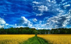 Picture wallpaper, nature, farm