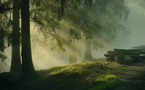 Picture forest, trees, nature, table, tree, morning, logs, needles, the sun's rays, benches