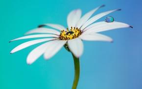 Wallpaper flower, petals, drops
