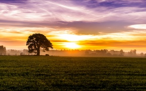 Picture field, the sky, grass, the sun, clouds, trees, fog, tree, dawn, glade, home, Morning