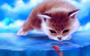 Picture ice, cat, bubbles, fish, fish, art