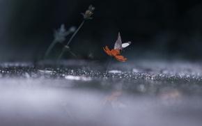 Picture drops, light, reflection, rain, darkness, butterfly, wings, Flower