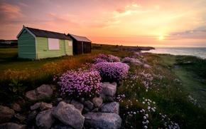 Picture grass, the sun, landscape, flowers, sunrise, stones, island, England, Portland, hut, UK, Portland, flowers, England, …