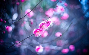 Picture flowers, branches, spring, petals, garden