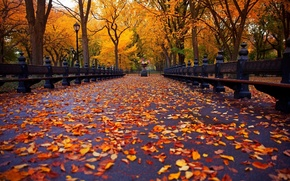 Picture autumn, Park, alley, falling leaves, benches