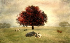 Picture landscape, style, background, cows