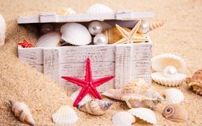 Wallpaper sand, sea, nature, starfish, pearls, chest, seashells