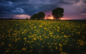 Picture field, the sky, clouds, landscape, sunset, flowers, nature