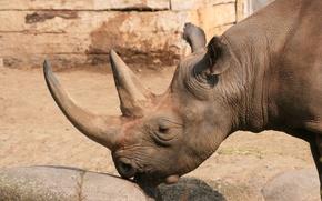 Picture stone, touch, Berlin zoo (Zoologischer Garten Berlin, the touch of lips, Black Rhino, Berlin Zoological …