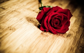 Picture flower, flowers, background, widescreen, Wallpaper, rose, petals, wallpaper, red, flower, widescreen, background, full screen, HD …