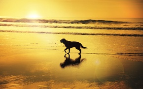 Picture wave, beach, reflection, sunrise, shadow, dog, mirror, solar