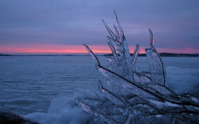 Wallpaper branch, water, Ice, winter