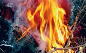Picture macro, branches, ash, fire, smoke, plastic
