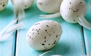 Picture eggs, Easter, blue, eggs, easter, feather, pastel