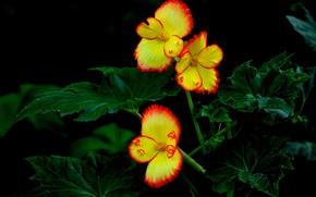 Picture leaves, macro, flowers, Bush, petals