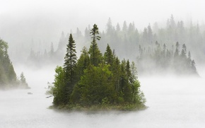 Wallpaper fog, morning, island, forest