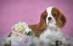Picture puppy, Spaniel, spotted, hydrangea